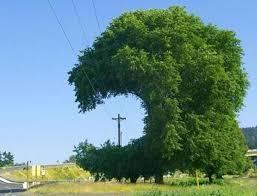 Odstranění stromoví